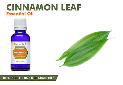 Cinnamon Leaf Essential Oil 100% Pure Natural PREMIUM Therapeutic Grade Oils