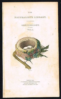 1833 - Hummingbirds Nest & Eggs, Nat.History, Jardine Frontispiece, Hand-Colored