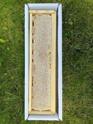 Pure Natural Raw Honey Comb 1300g (DIRECT FROM THE HIVE)