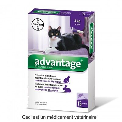 Advantage Anti-puces pour Chat (>4 kg) - 1 pipette