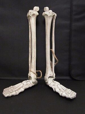 Two Halloween Props Articulating Skeleton Lower Legs & Feet Left & Right