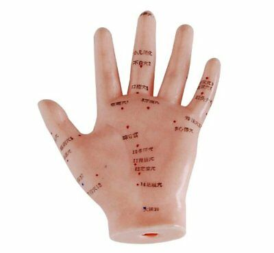 Om® Anatomy Mannequin Series Hand Acupuncture Model Massage Xc509 Made By Om®