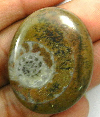 43.95Ct AAA+ NATURAL BROWN AMMONITE FOSSIL 25X31MM OVAL CABOCHON UNIQUE GEMSTONE