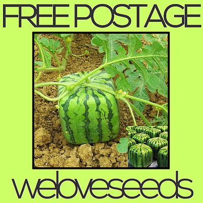 LOCAL AUSSIE STOCK - Japanese Square Watermelon, Fruit Seeds ~10x FREE SHIPPING