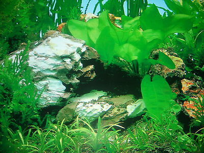 Vinyl Background (suitable for use with Fish Tanks or Recycling Bins!)