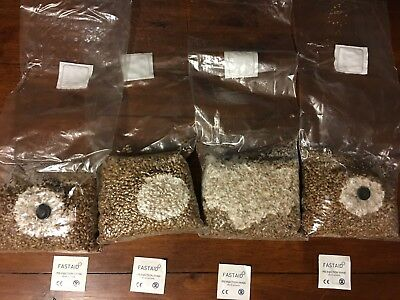 4x1lbs Sterilized Rye Berry Mushroom Substrate Grain Spawn Filter+Injection port