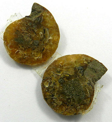 8.91 GM 1 Pair best quality NATURAL AMMONITE FOSSIL 23x28MM excellent Gemstone