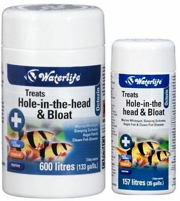 Waterlife Octozin 21 80 Internal Parasite Treatment Fish Tank Hole In The Head