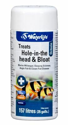 Waterlife Octozin 21 Internal Parasite Treatment Fish Tank Hole In The Head