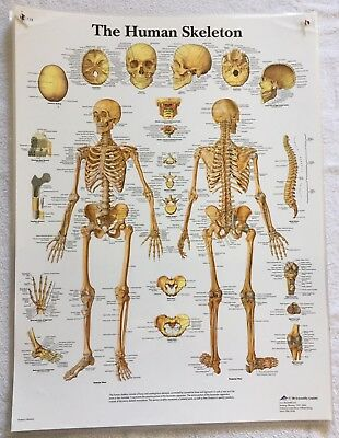 8 3B Scientific Anatomical Posters - Late 20th Century Laminated