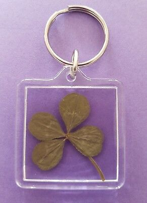 Real Genuine Four 4 Leaf Clover In a Acrylic Keyring  Lucky Xmas Work Token