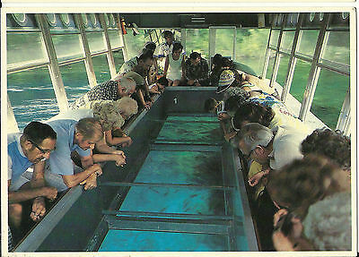 Postcard Silver Springs Glass Bottomed Boat Fish Florida