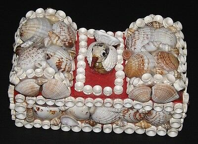 """Seashell Divided Box . Completely Made of Seashells. Unique. Approx. 6"""" Long"""