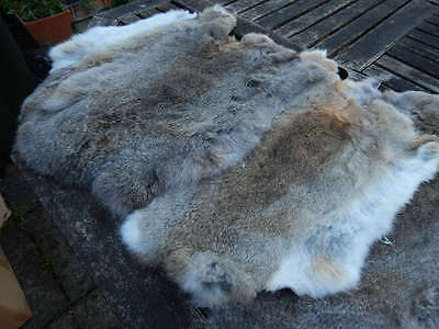 Natural Rabbit Skin Real Fur Pelt Tanned for; dummy, animal training, crafts etc