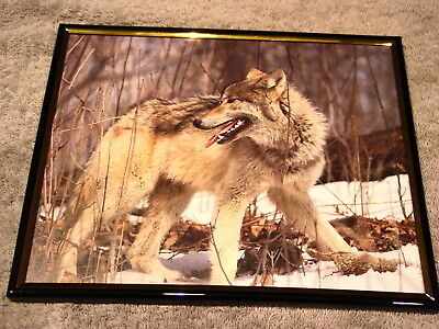 WOLF 8X10 FRAMED PICTURE #2 ( poster )