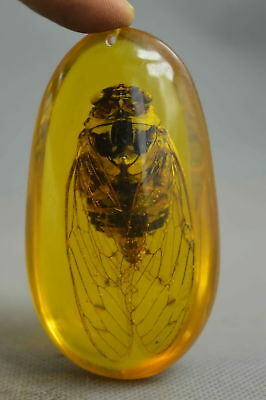 Chian Collectable Handwork Decorative Amber Inner Inlay Cicada Fashion Pendant