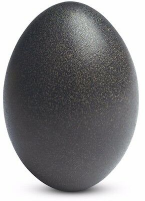 Beautiful Empty / Blown Green Emu Egg Shells for Carving/Art/Crafts - A+ Quality