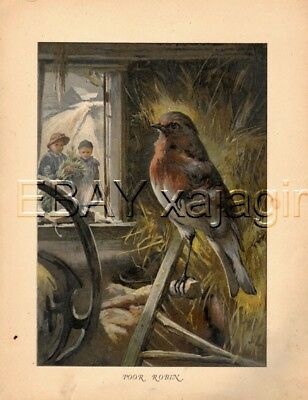 BIRD Robin in Barn, Kids Outside, Antique Color Print