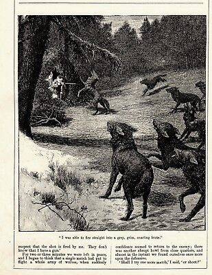 WOLF Hunting, Hunters Shoot from Blind,  Antique 1908  Prints