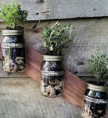 Mason Jar Herb Planter from Sustainable by Nature -  Vertical