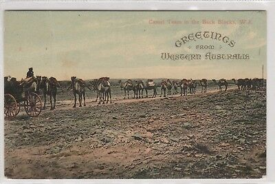 VINTAGE POSTCARD GREETINGS FROM W. A  CAMEL TEAM IN BACK BLOCKS   1900s W.A.