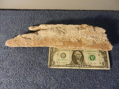 Real Wooly Mammoth Bone Fragment Fossil Bark scales *Really Cool* *LOOK*