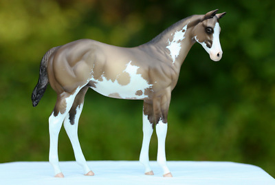CM Custom PS Peter Stone Weanling Painted By Sheri Rhodes Grulla Pinto LSQ