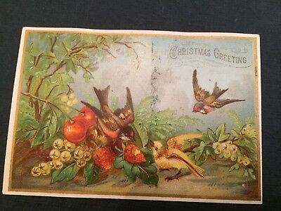 Victorian Christmas Card Birds In A Line