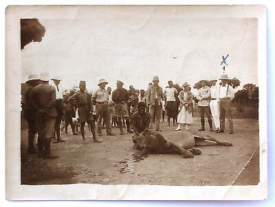 VINTAGE PHOTOGRAPH - LION HUNTING - Lulua BELGIAN CONGO ca. 1920 with MS note