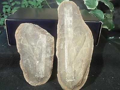 Mazon Creek Fossils Large Piece of Wood