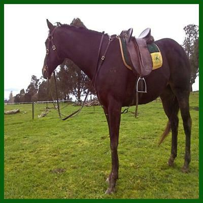LOVE MY HORSE Australian Barcoo Breastplate Leather Brown Fits Pony Cob Full