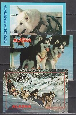 Vintage 4 x 6 postcards - 3 Different of Alaskan Sled Dogs