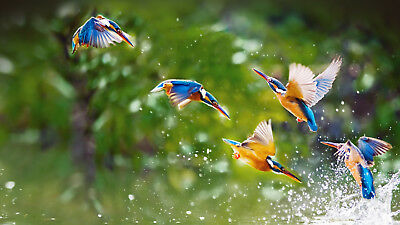 the beauty of birds that play water animal FREE SHIPPING