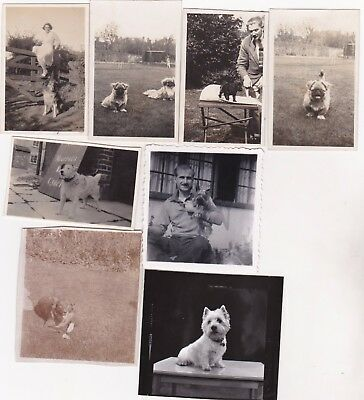 Lot 8 Small Old Photo People Dogs Pet Animals Random Ag82