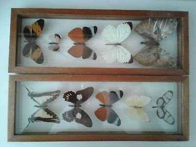 10 REAL FRAMED BUTTERFLIES MOUNTED in a WOODEN FRAME with DOUBLE SIDED  GLASS