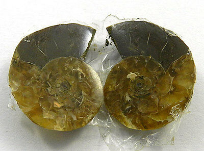 1 Pair 5.45GM Genuine NATURAL AMMONITE FOSSIL 23x18mm Fancy Shape Gemstone