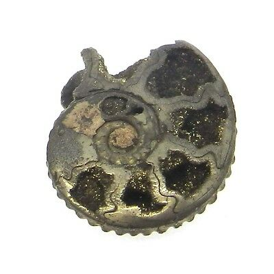 1Pcs Rare Product 17MM Russian Pyrite Ammonite Fossil Jewelry Gemstone GS00840