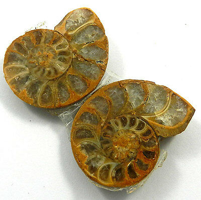 20.21GM Awesome 1 Pair NATURAL AMMONITE FOSSIL 27x37MM fancy rough gemstone