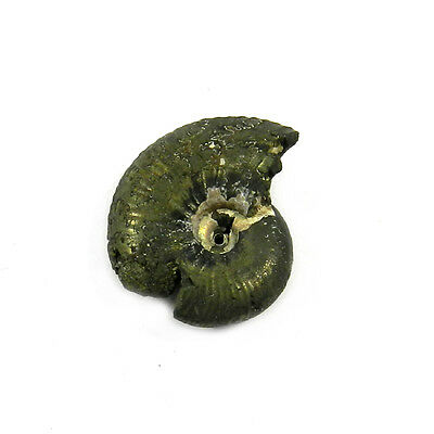 1Pcs Rare Product 19MM Russian Pyrite Ammonite Fossil Jewelry Gemstone GS00831