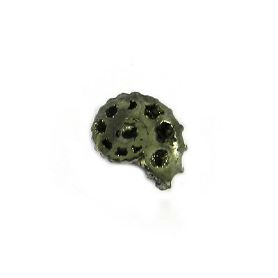 1Pcs Rare Product 19MM Russian Pyrite Ammonite Fossil Jewelry Gemstone GS00822