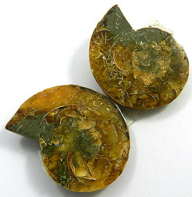 27.65Gm A++ 1 Pair NATURAL AMMONITE FOSSIL 33x40MM unique gemstone for jewellery