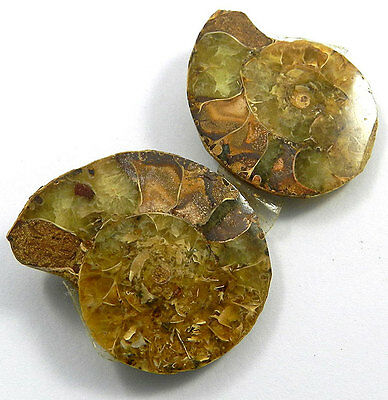 26.22Gram 1 Pair NATURAL AMMONITE FOSSIL 31x39MM stunning gemstone for pendant