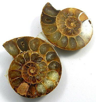 25.74Gram Specimen 1 Pair NATURAL AMMONITE FOSSIL 30x38MM fancy jewelry gemstone