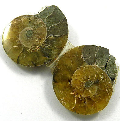 9.78 GM Fabulous 1 Pair NATURAL AMMONITE FOSSIL 23x29MM Loose Gemstone