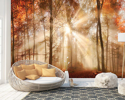 Wall Mural Photo Wallpaper Picture EASY-INSTALL Fleece Red Gold Light Forest Sun