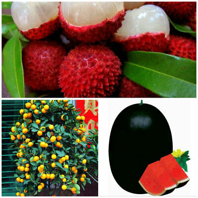 Potted Organic 3 Kinds Delicious Fruit Seeds For  Home Garden Planttin Bonsai
