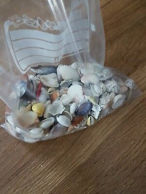 large joblot of small / medium shells ideal for craft project decoration 500g