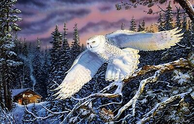 Modern Home Decor Giclee prints oil painting Art wall on canvas Snowy owl my324