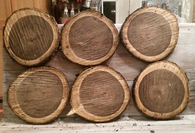 "LOT OF 6 Fresh Black Walnut Slabs Slice Tree Trunk 9"" x 1"" Rustic Wood"