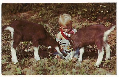 THREE LITTLE KIDS A Boy Child & Pair of BABY GOATS  Postcard Vintage Cute Humor